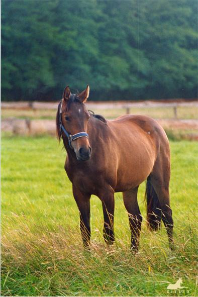 Ginger in Osnabrück (2004)