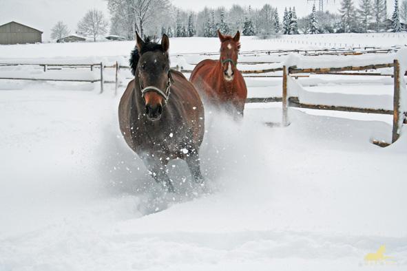 Grainus u Ginger toben im Schnee (2006)